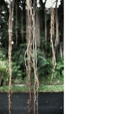 #hanging #roots #sg
