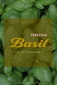 Knowing how to dry basil or otherwise preserve the leaves for fresh applications in pesto or soups will let you make use of your whole crop. Storing Fresh Basil, Fresh Herbs, Bulk Cooking, Bulk Food, Mason Jar Meals, Meals In A Jar, How To Make Pesto, How To Dry Basil, Freezing Basil