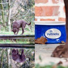 Blue Bowl, Cat Supplies, Pet Bowls, Labrador, Ceramics, Pets, Animals, Instagram, Ceramica