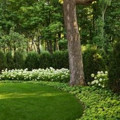Traditional Landscape Design, Pictures, Remodel, Decor and Ideas - page 6