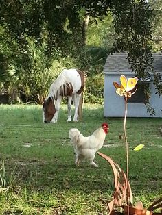 Chicken & Horse On The Farm,my dream is coming true......