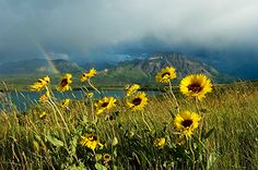 Waterton Lakes National Park © S. Waterton Lakes National Park, National Parks, One Peace, Beautiful Places, Amazing Places, First World, Montana, North America, The Good Place