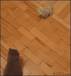 Round house kitty