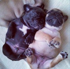The little bellies!