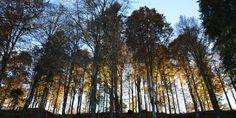 Ecco le foreste italiane diventate patrimonio dell'Umanità