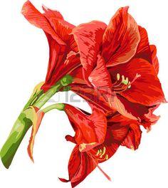 amaryllis flower - inspirace