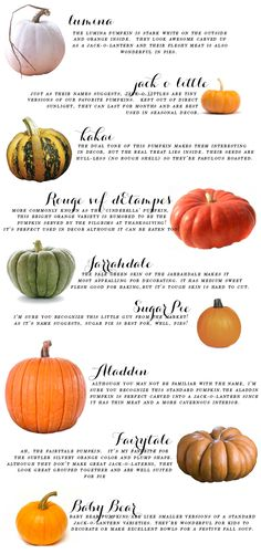 It's officially fall tomorrow, so let's get ready in the best way humanly possible starting today with a pumpkin education. I am so absolutely obsessed with fall that I usually just dive right into pumpkin purchases willie nilly without any forethought, b Fall Pumpkins, Halloween Pumpkins, Fall Halloween, Grow Pumpkins, Types Of Pumpkins, Planting Pumpkins, Halloween Science, Happy Halloween, Mabon