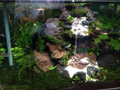 Aquascape with waterfall