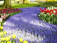 Parque jardim com campo de tulipas e lavanda