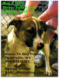**URGENT/SHELTER IS FULL** This little guy is waiting for his forever home at the Boone County Dog Pound in Fosterville WV but time is running out! If you can foster or adopt please contact the shelter at 304-837-3262 or email BARC_WV@yahoo.com