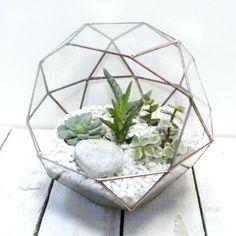 Glass Terrarium Display Case Copper Small | Glass Terrarium, Display Case  And Terraria