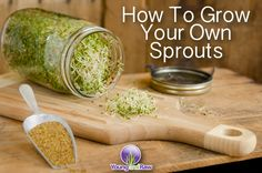 Growing sprouts is actually a pretty simple process. Check out our fb page to get the scoop. Plant Based Recipes, Raw Food Recipes, Healthy Recipes, Free Recipes, Growing Sprouts, Alfalfa Sprouts, Sprouting Seeds, Clean Eating, Healthy Eating
