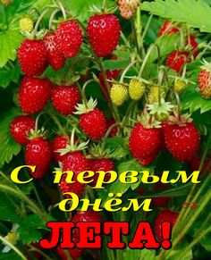 Good Morning Flowers, My Mood, Fruit, Quotes, Summer Recipes