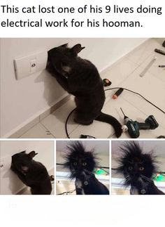 The curiosity of the cat . Funny pictures - cats-Die Neugier der Katze… Lustige Bilder – katzen The curiosity of the cat Funny pictures - Animal Jokes, Funny Animal Memes, Stupid Funny Memes, Cute Funny Animals, Funny Relatable Memes, Funny Cute, Cat Memes, Funny Tweets, Funny Animal Pictures