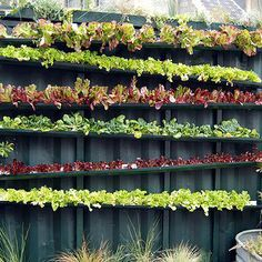 Intensive Vegetable Gardening In Small Spaces - neat ideas for planting annuals in small spaces