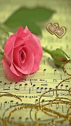 ruma♥ Rose Animation . ♫ ♪ ♫ ♪ ♪ ♫ ♫ ♪ ♫ ♪ ♪ ♫ ♫ ❤