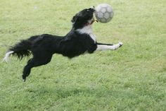 Bella - Best. Soccer. Player. EVER!