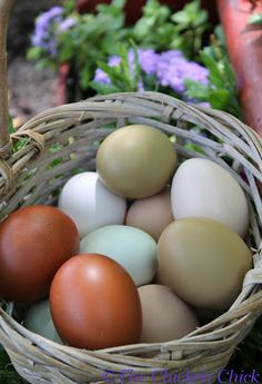 eggs beautiful eggs