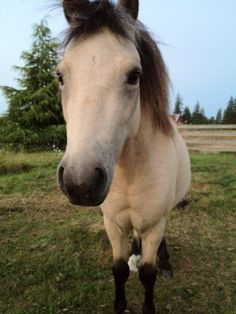 miniature horse :)