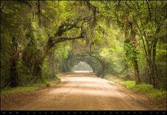 positivelynoteworthy:    The Deep South - Edisto Island Charleston...