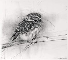 iamjapanese:  April Coppini(American) Buff-tailed Bumble Bee, Queen     Charcoal on Paper title unknown spotted pygmy owl