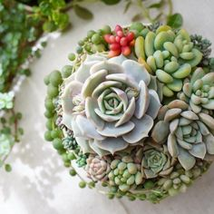 Shop 200 varieties of Succulents Online and 5 Monthly Subscription Boxes. Our Rare Succulents are gorgeous & healthy. Succulents are shipped year round with Care Instruction. Succulents Online, Succulents In Containers, Rare Succulents, Container Plants, Planting Succulents, Succulent Plants, Cacti, Carnivore, Succulent Arrangements