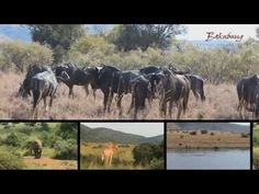 Bakubung our World Sun City, Our World, Serenity, National Parks, Africa, Bucket, Horses, Animals, Animales