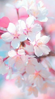 Photography Wallpaper Iphone Pink Flowers 23 Ideas For 2019 Spring Wallpaper, Nature Wallpaper, Trendy Wallpaper, Pink Flower Wallpaper, Cherry Blossom Wallpaper, Pink Blossom, Blossom Flower, Pink Flowers, Beautiful Flowers