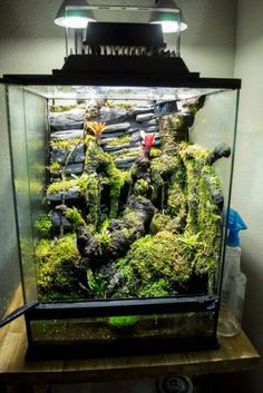 Great terrarium