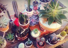 Que bueno que viniste! #cactusysuculentas #cactus #cacti #cactuslover #cactilove #suculentas #succulents #succulove #market #malasaña #dosdemayo #dosde #plazadosdemayo #madrid