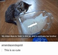 Cat Care Top Tips And Advice. All these things you get as a cat owner. Cute Animal Memes, Animal Jokes, Cute Funny Animals, Funny Animal Pictures, Cat Memes, Funny Memes, Funny Quotes, Cute Little Animals, Tumblr Posts
