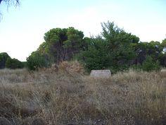 SDC10701, Nature, Pinar Vadohondo, Tinajas, Bodega D.Martín (Villarrobledo, Albacete, España, 7-14 Septiembre, 2013).