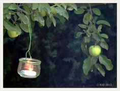 Natur-im-Garten Hamilton 2012-08