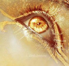 Eyes of Gold.: