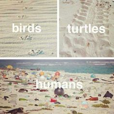 Something to think about... What are YOU doing to make our human impact look differently?