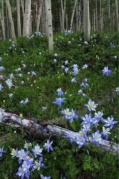Do you know what Ancolie means? In english, the columbine flower. It's our founder Chloe Vichot's favorite.