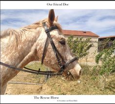 Our Friend Doc, The Rescue Horse by Seraphina Dahle, http://www.amazon.com/dp/B007W5Y4J4/ref=cm_sw_r_pi_dp_6Rcdqb1Y4C7TV