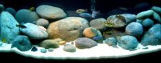 Holiday Aquatics: Setting up a Lake Malawi Cichlid Tank