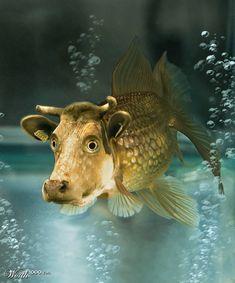 Cow Fish.