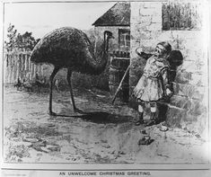 """An Australian Christmas illustration, featuring a terrified child with emu, Victorian. """"An Unwelcome Christmas Greeting"""" Funny Christmas Cards, Vintage Christmas Cards, Xmas Cards, Christmas Greetings, Vintage Cards, Greeting Cards, Christmas Graphics, Halloween Cards, Holiday Cards"""