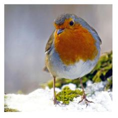 Pretty bird...