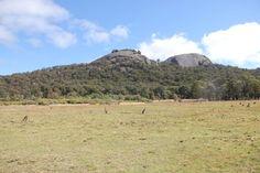 National Park Granite Belt, Queensland, Australia ... Fotoblog: Cangurus http://mikix.com/fotoblog-cangurus/