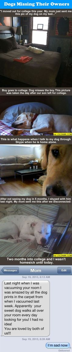 Do You Know Your Dog Misses You When You're Gone.:
