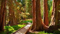 "<p>Tucked away in southern Sierra Nevadas, Sequoia Park spans over 400,000 acres and is home to some of the biggest trees in the world. In fact, the <a href=""http://www.livescience.com/29144-worlds-largest-tree.html"">world's largest tree</a>, by volume, is found there. </p><p><strong>For more information, visit <a href=""https://www.nps.gov/seki/index.htm"">nps.gov</a>. </strong></p>"