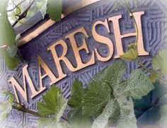 Maresh Red Hills Vineyard began as orchards which gave way to vineyards in making it the fifth vineyard in Oregon and the first on Worden Hill Road, now a hallmark in the Dundee Hills AVA. Oregon Wine Country, Pinot Gris, Downtown Portland, Willamette Valley, Orchards, Dundee, Ava, Wines, Vineyard