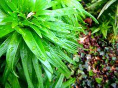 Dew Drops (renfehr.wordpress.com)