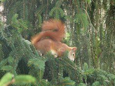Squirrel, Fox, Animals, Animales, Animaux, Squirrels, Foxes, Animal, Animais
