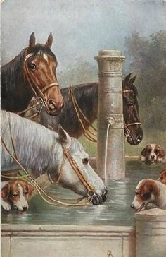 Horses and Hounds at Water Trough. Actual Picture is approx x 11 on One 16 inch Square White Fabric Panel to Sew or Quilt Horse Posters, Hunting Art, Vintage Horse, Horses And Dogs, The Fox And The Hound, Horse Drawings, Equine Art, Horse Pictures, Western Art