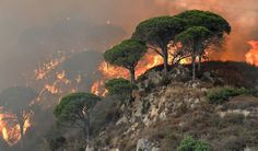 This photograph taken on July 10, 2017, shows fire ravaging a hill in the Annunziata district of Messina. Across the country Italian firefighters have intervened more than a thousand times in the last days to fight brush or scrub fires. / AFP PHOTO / GIOVANNI ISOLINO