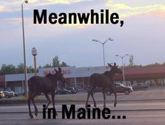 Presque Isle, ME ~ That's Marden's Store in the background